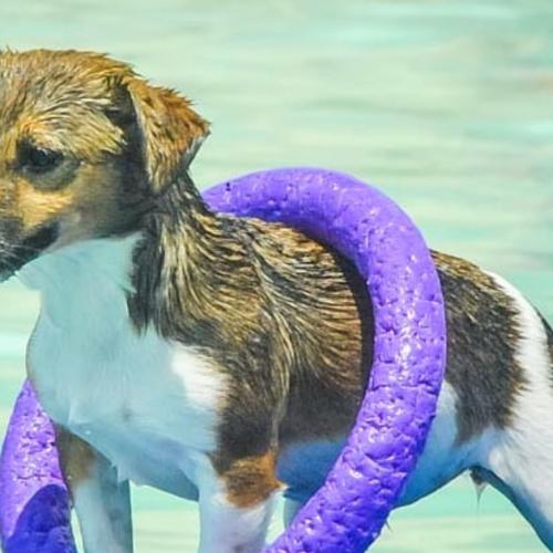 aigua gossos puller
